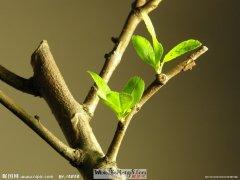 梦见树木发芽